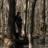 /assets/1577/160_bd_woods_2.jpg