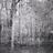 /assets/1577/deer_cam.jpg