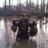 /assets/1577/woods_ducks_1.jpg
