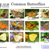 /assets/2039/heard-common-butterflies_pa.jpg