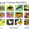 /assets/2039/heard-common-butterflies_v2.jpg