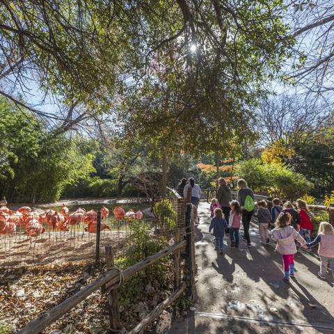 visiting the flamingo exhibit