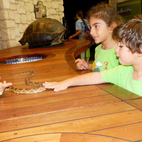meeting zoo animals