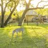 /assets/2059/african_savanna_-_giraffes_and_zebras.jpg