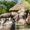 /assets/2059/african_savanna_-_pelicans.jpg