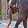 elephant with toys