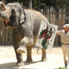 elephant with zookeeper