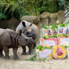 rhinos enjoying treats