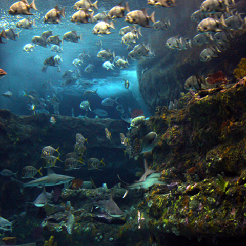 The Cape Fear Shoals habitat, modeled after the Cape Fear Shoals off our coast.