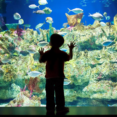 A young guest captivated by the Shark Tooth Ledge habitat.