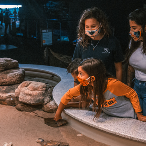 Guests get up close to the horseshoe crabs and stingrays in the touch pool.