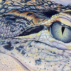 "Langly C. ""Alligator"" from the colored pencil art show"