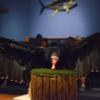 Achilles the Turkey Vulture