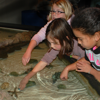 Campers learn about the animals in our care.