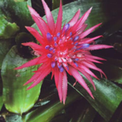 /assets/2348/bfh-flower-200x200.jpg