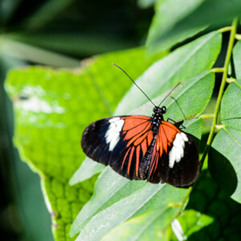 /assets/2348/butterfly-collection-300x300.jpg