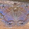 Black Witch Moth male (Ascalapha odorata)