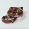 Florida scarlet snake (Cemophora coccinea coccinea)