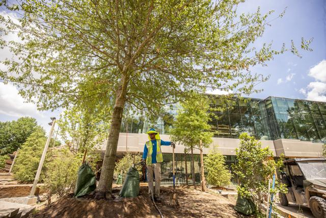Planting Tree Lodge Exterior, June 2018