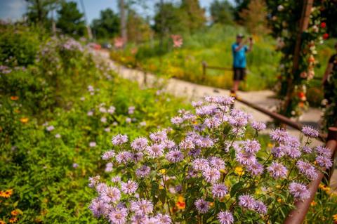 Bea Balm in Wetland Gardens