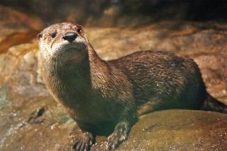/assets/2531/otters.jpg