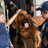 Scouts learned about how police dogs do their work.