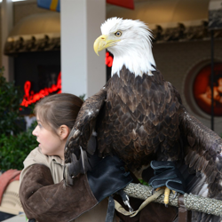 A bald eagle greets scouts during the 2014 Scouts Rock at Graceland.
