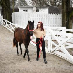 Priscilla Presley is passionate about horse rescue.