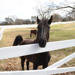 Duke is the latest addition to the Graceland stables.