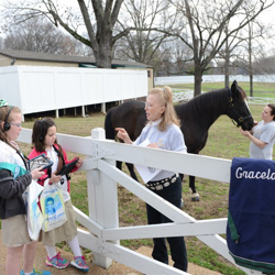 Scouts learn about the horses at Elvis Presley
