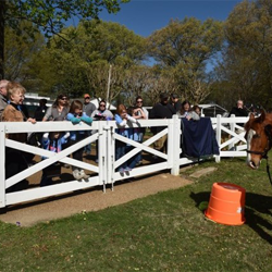 The horses at Graceland made an appearance at Scouts Rock.