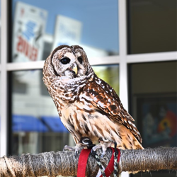 Scouts met several rescue animals, including this owl, during Scouts Rock at Graceland.