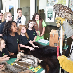 Scouts learned about this owl, rescued by Tennessee State Parks.