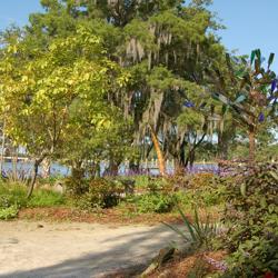 Riverview Gardens