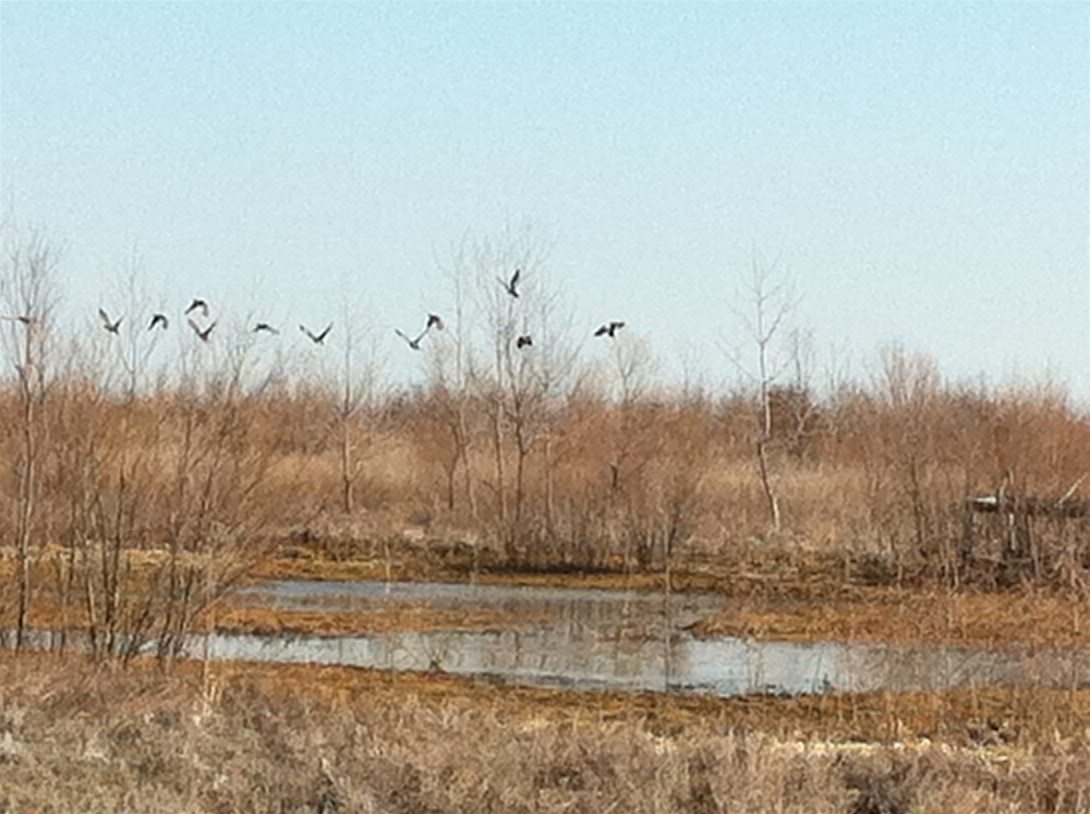 Ducks Unlimited Property For Sale