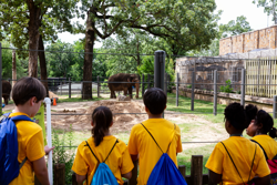 zoofari attendees watching an elephant
