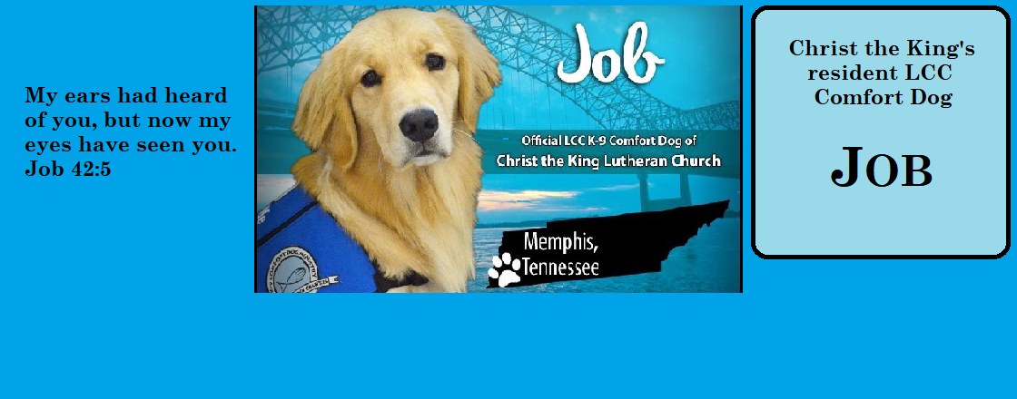Meet JOB COMFORT DOG