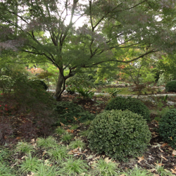 Plants in the Asian Garden represent those native to the climates of Eastern Asia.
