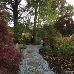 A variety of Japanese maples provide seasonal color and beauty in the Asian Garden.