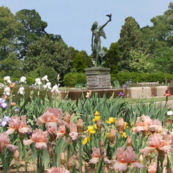 Iris, Goddess of the Rainbow, watches over the TN Bicentennial Iris Garden and Daylily Circle.