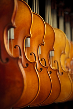 Step-up violins at Amro Music