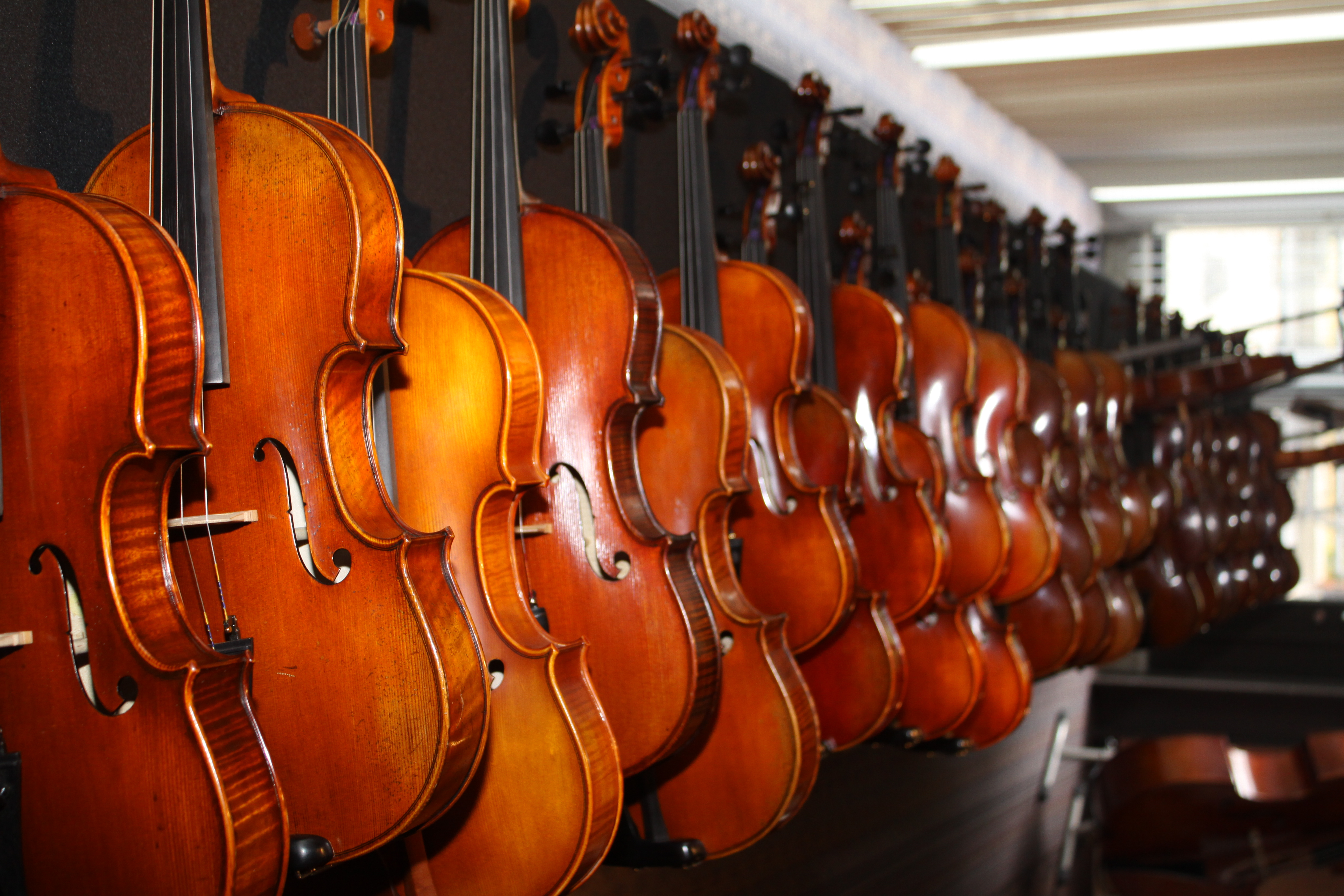 A side view of at least 20-30 violins lined up on a table