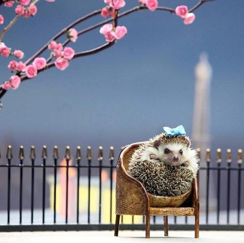 http://www.frostbakeshop.com/assets/1950/7_mini-hedgehog.jpg