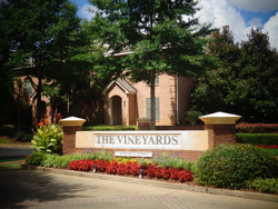 The Vineyards