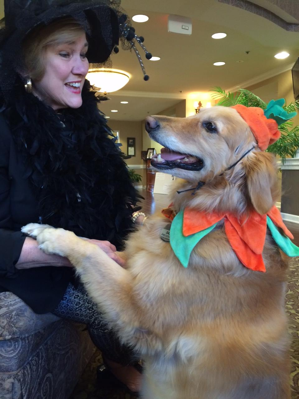 the village at germantown dog | memphis area golden retriever rescue | the village at germantown