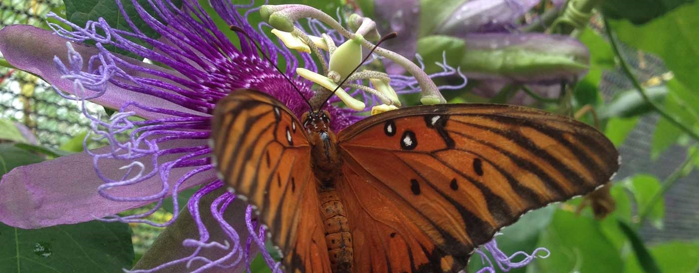 <p>Native Texas Butterfly House & Garden</p><p>Open through September 30, 2018</p>