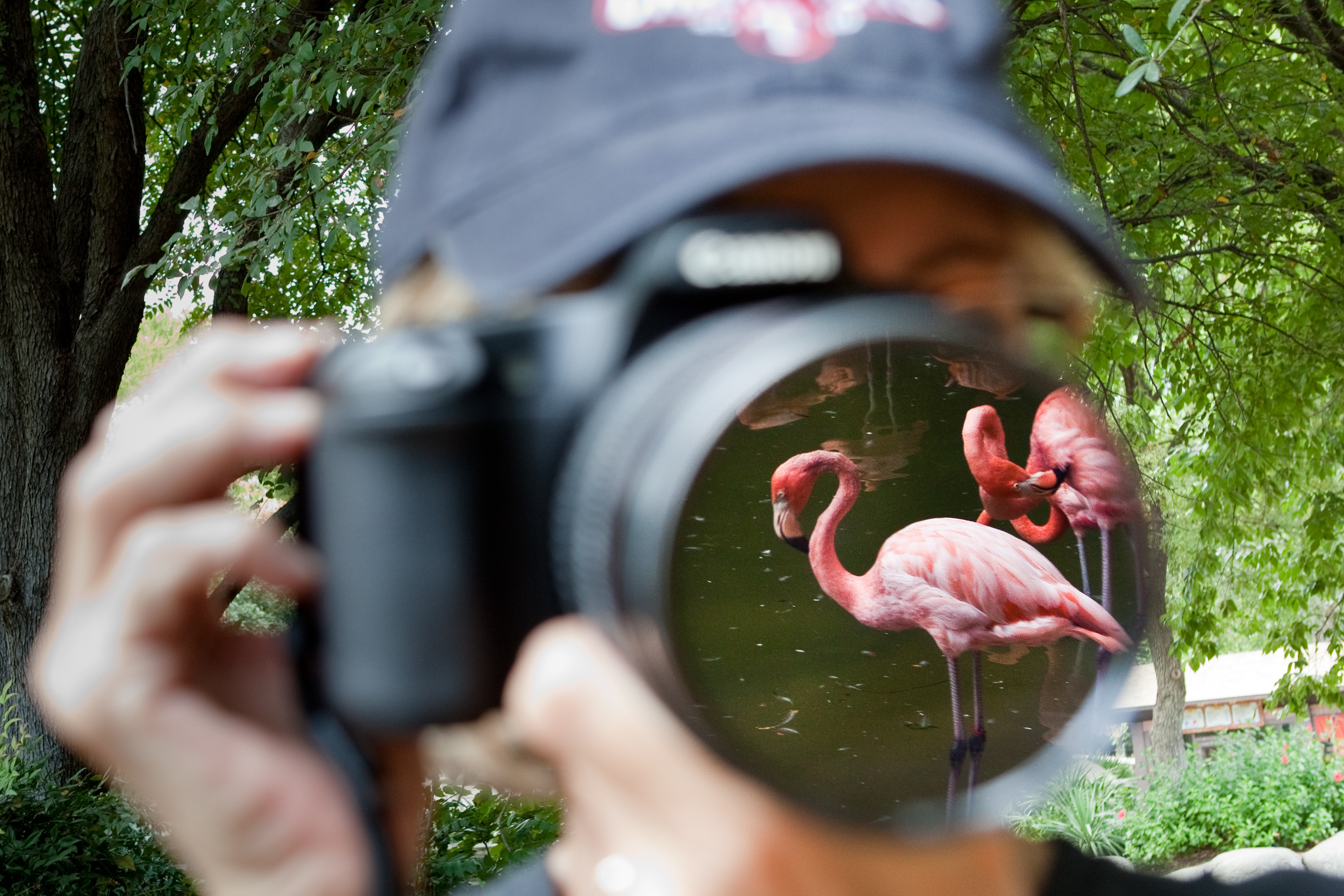 photographer taking photo of flamingo at the Fort Worth Zoo
