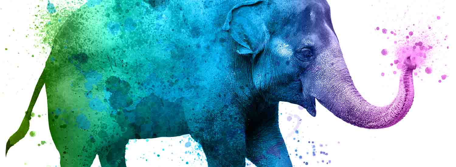 watercolor elephant graphic for Fort Worth Zoo's A Wilder Vision campaign