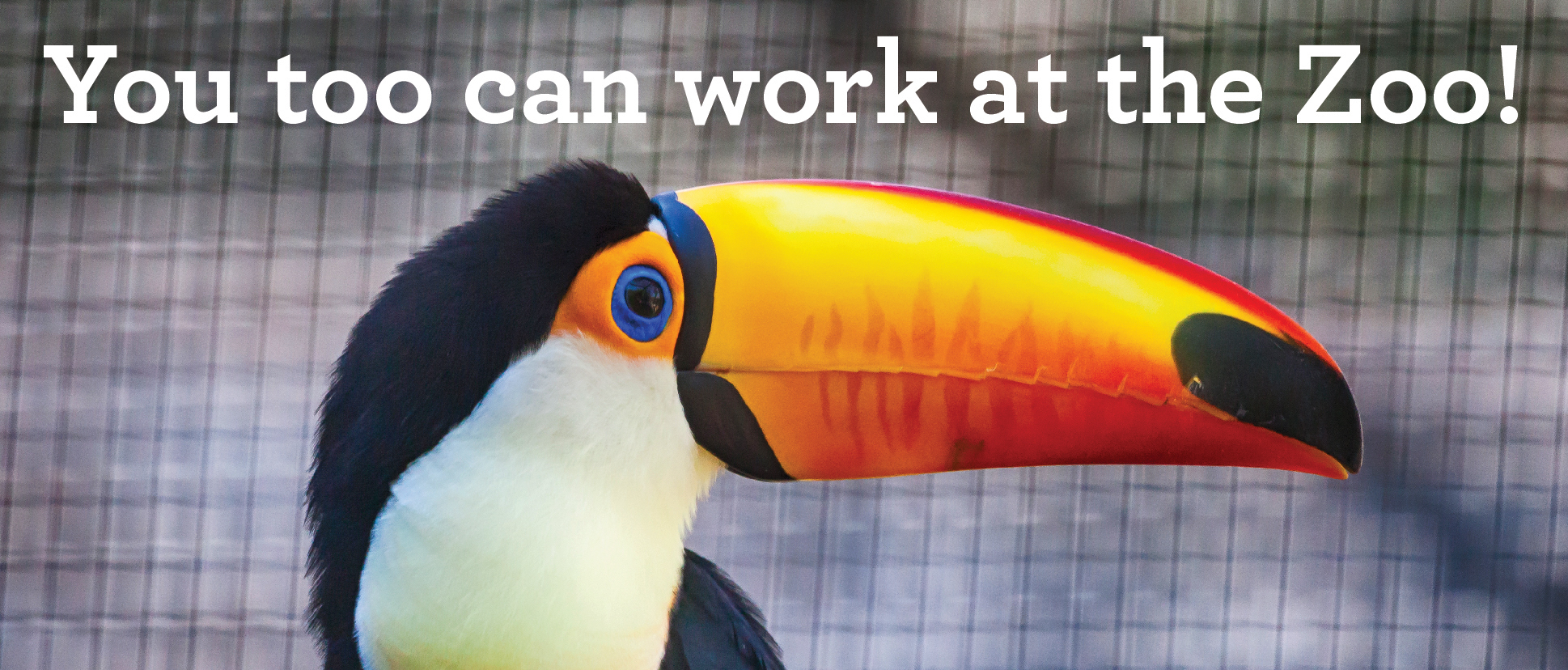 Careers – Zookeeper Job Requirements