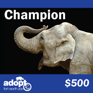 Fort Worth Zoo Champion Adoption Logo